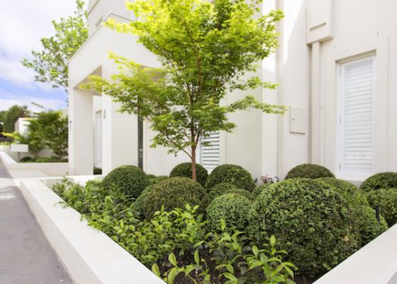 Melbourne Buxus plant balls garden design with layered planting